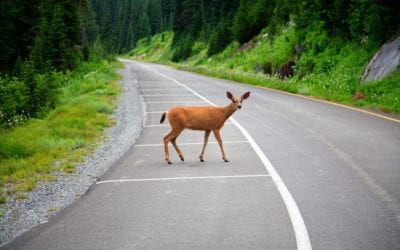 3 Ways to Avoid Animals in the Road